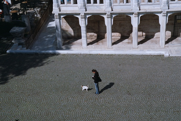Visit the Istanbul Archeological Museum and its world-class collection. Or have a moment with one of Istanbul's many street cats. Or both :)