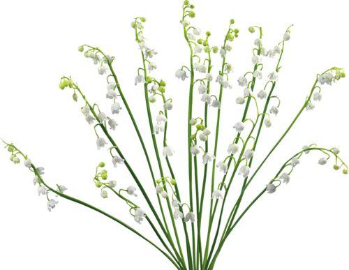 70 best fleurs rose arbres plantes feuilles images on for Arbres plantes fleurs