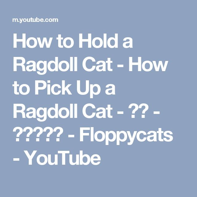 How to Hold a Ragdoll Cat - How to Pick Up a Ragdoll Cat - ねこ - ラグドール - Floppycats - YouTube