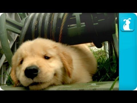 If only life was this simple. This video is sure to put a smile on any dog lover's face.