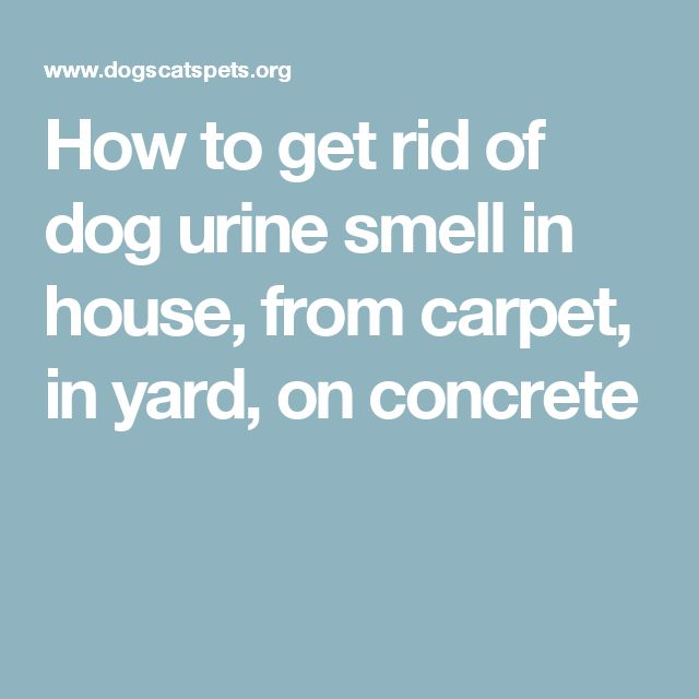 My Dog Peed On My Rug: 17 Best Ideas About Dog Pee Smell On Pinterest