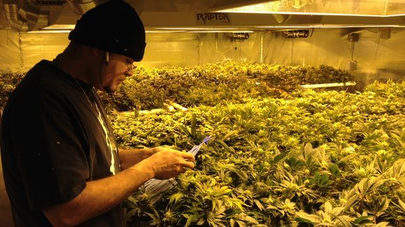 Weil zwei US-Bundesstaaten den Verkauf von Cannabis legalisiert haben, geraten die mexikanischen Drogenkartelle in Bedrängnis. Das hat auch Auswirkungen auf Europa.