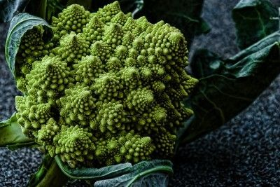 Romanesco Broccoli Care: How To Grow Romanesco Broccoli Plants - Brassica romanesco is a fun vegetable in the same family as cauliflower and cabbage. Planting romanesco broccoli is a great way of providing variety in your family's diet. Learn more about this veggie here.