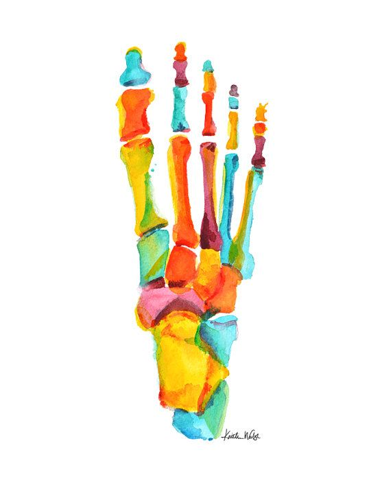 Foot Anatomy Print - Podiatry Print - Foot Watercolor - Bones of the Foot Art