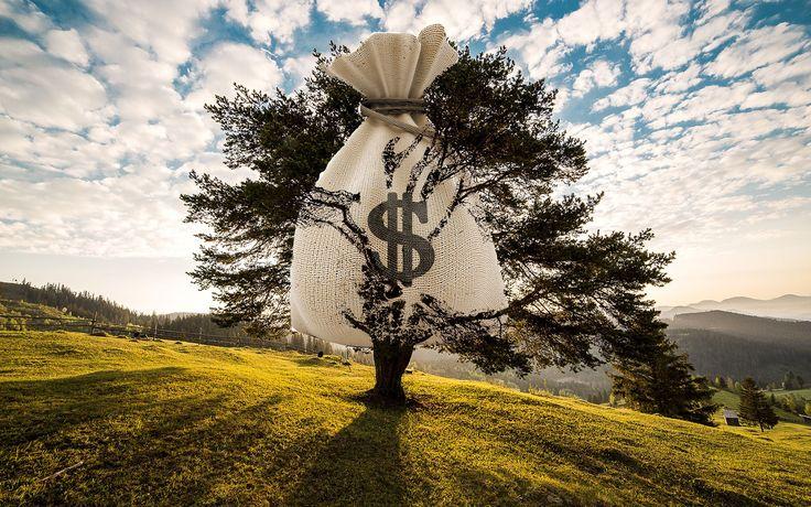 Best 25 Winter Trees Ideas On Pinterest: 25+ Best Ideas About Money Trees On Pinterest