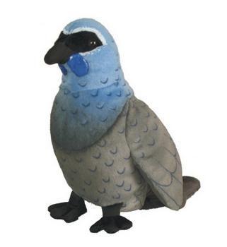 Kokako NZ Bird with authentic sound