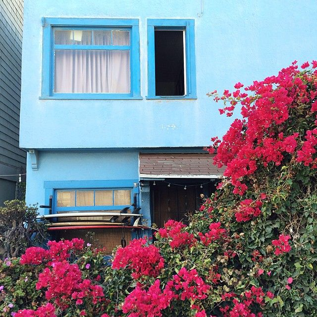 Stack Of Surfboards Bougainvillea And Warby Parker Blue In Venice Pinterest