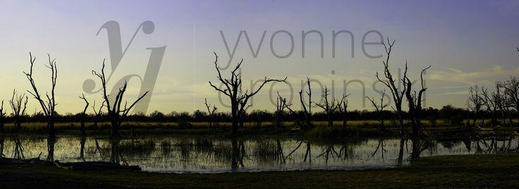 Delta Okawango największa w świecie delta śródlądowa rzeki Okawango, uchodzącej do znajdującego się w północnej części obecnej Botswany jeziora Makgadikgadi