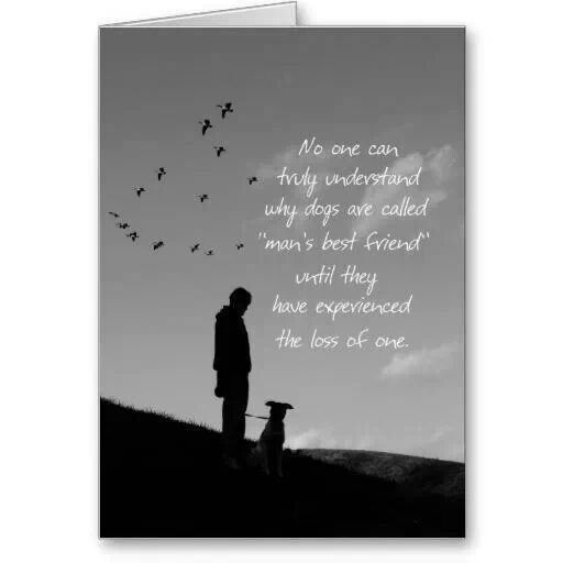 Lost dog quote Doggy Stuff Pinterest Lost, Every day