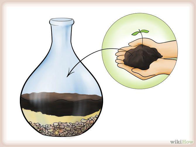 Grow a Garden in a Bottle