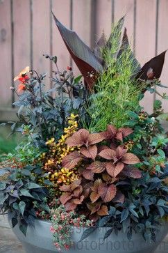 17 Best 1000 images about G Container Gardening on Pinterest