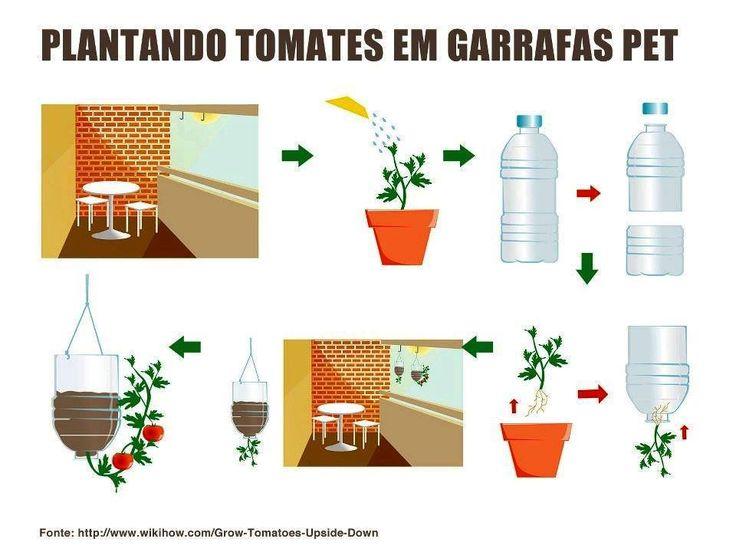 Como plantar tomate en garrafas pet