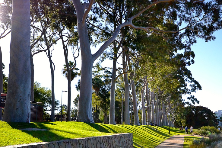 The beautiful trees in #kingspark.
