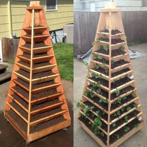 Strawberry Teepee - if you soak the wood with boiled linseed oil (flax) or char the inside surface with a propane torch,it will greatly inhibit rotting