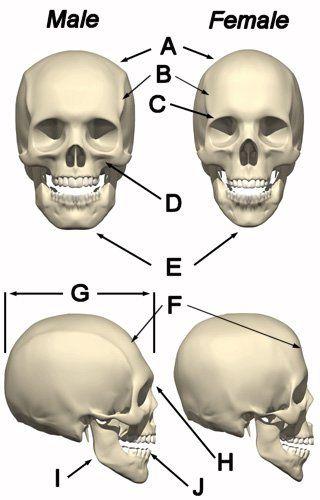 skull theory predictor
