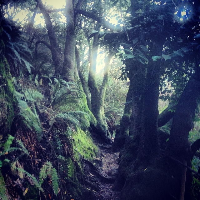 The magical trail to Jewel Lake In Tilden Park, Berkeley, CA. Hiked here so many times. Beautiful.
