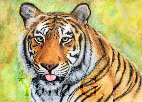 This drawing of the tiger i did in 2011 using professional grade colored pencils. Drawing is matted and ready to be framed. Drawing size: 8 x 11
