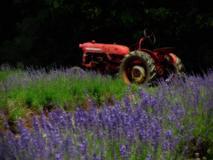 17 best join my community images on pinterest join tractor and vintage tractor in a lavender field fandeluxe Images