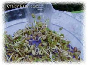 Graines germées - durée de germination, de trempage, et conseils