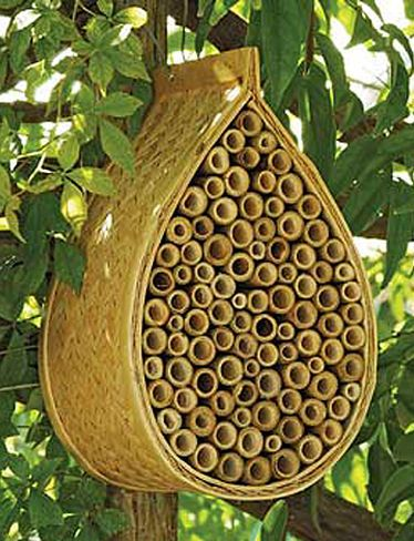 Mason Bee House - Boost your garden's productivity by providing a happy home for peaceful, non-stinging Mason bees. Slightly smaller than honeybees, mason bees are incredible pollinators. Each one visits as many as 1000 blooms per day — 20 times as many as a honeybee! Hang this natural bamboo house against a tree or wall where it will get morning sun and attract bees. Female bees fill the bamboo tubes with their eggs, and nectar and pollen for the young to eat.