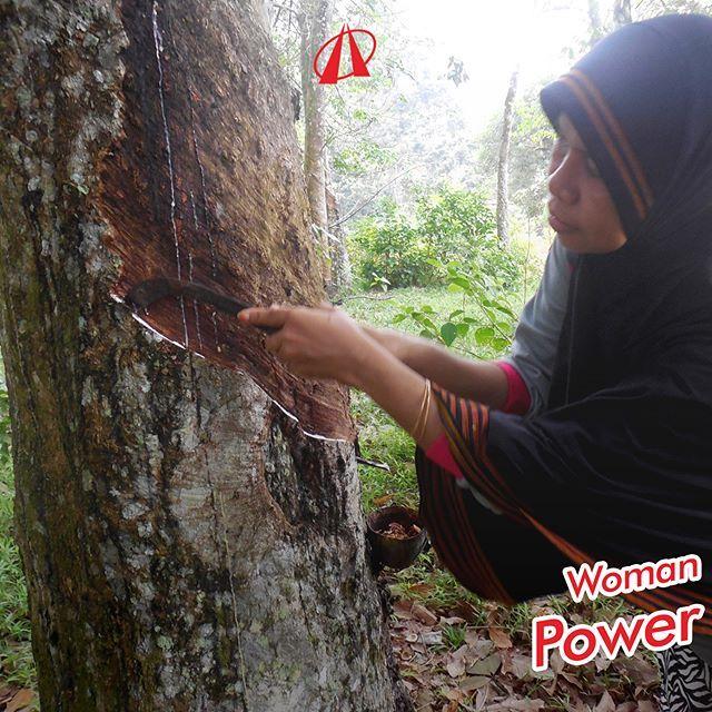 Perkebunan Karet Indonesia