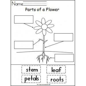 Plant Parts Worksheet Kindergarten