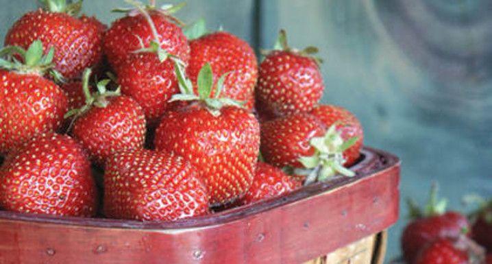 Les fraises du Québec, une pure merveille ! Dégustez celles de la Fraisière Pont-Rouge au #FGDN2016 #FGDN #terroir #quebec #neuville #strawberries #fraises #fruits #fresh #healthy #summer #été #food #cuisine