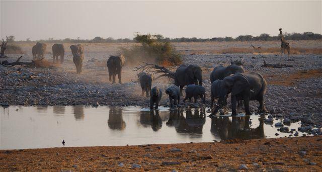 Sunset at waterhole. Etosha, Namibia