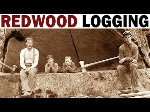 Redwood Logging | 1946 | Documentary on the Giant Redwood Lumber Industry in California - YouTube