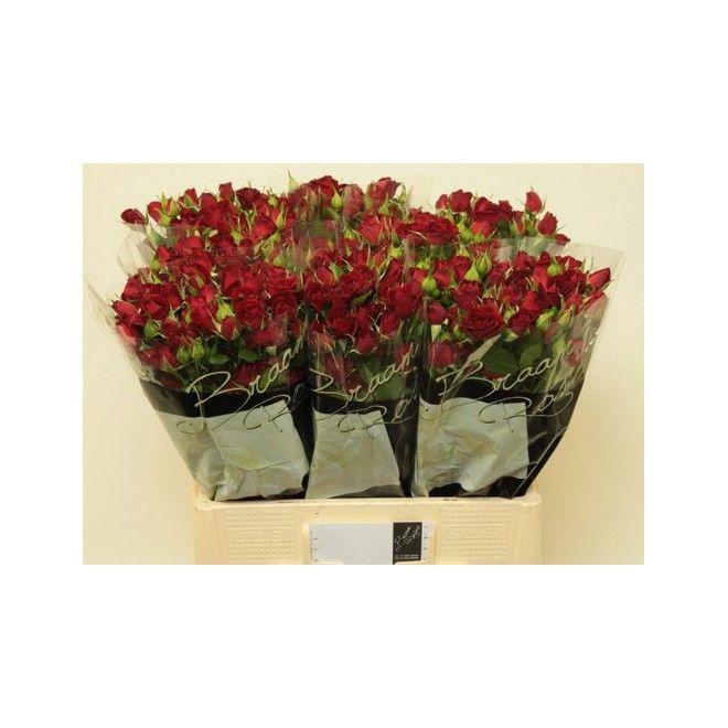 Les 25 meilleures id es de la cat gorie grossiste fleurs - Grossiste fleurs coupees pour particulier ...