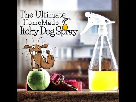 ITCHY DOG? TRY THIS RECIPE FOR SOME RELIEF! Itchy now or itchy this spring, with the help of Doctor Karen Becker this new & improved yeast smashing, anti-itc...