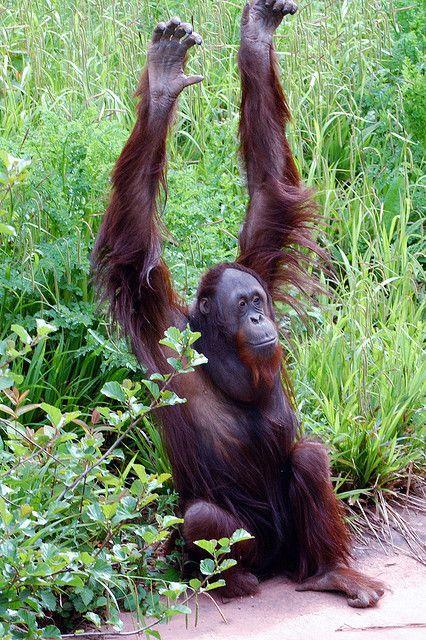 Funny Wildlife — Hands up by rickshaw180 on Flickr. All ...