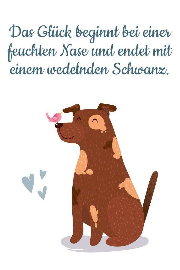 Pin Auf Zitate Sprüche Lebensweisheite über Hunde