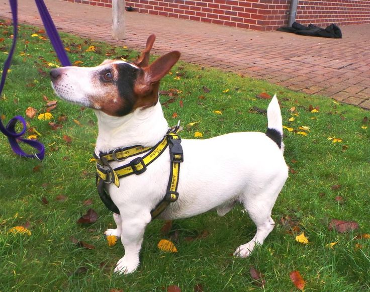 Looking at Paddy @dogstrust #rehomeadog