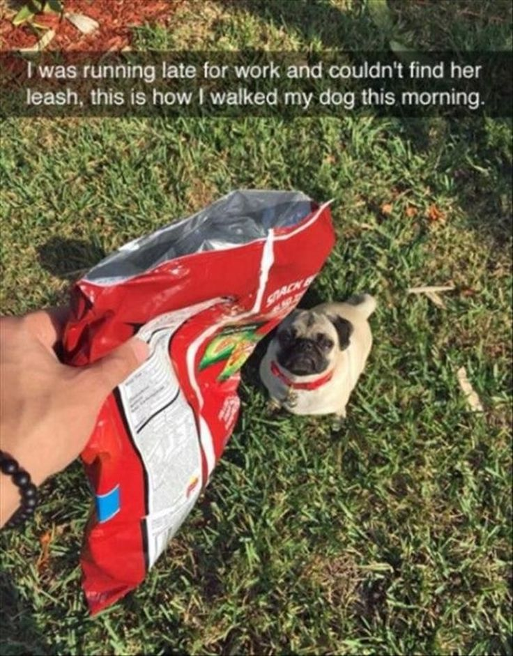 Funny Animal Pictures Of The Day – 23 Pics #funnydoglaughter