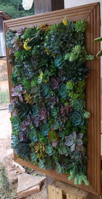 vertical succulent garden in photo frame!