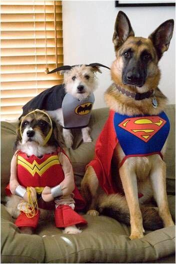 Super Heroes: Animals, Dogs, Pet, Costume, Superheroes, German Shepherds, Super Heroes, Halloween