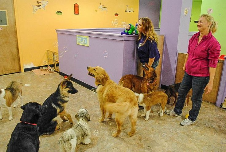 Doggie Daycare It's Bubble Time --  Daycare for dogs.  Dog Activities  http://hdcspa.com/services/daycare/  #happyDogs