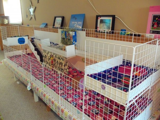 C and C cage with lofts and balcony Guinea Pig Cage