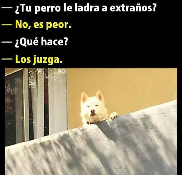 Mi perro también me juzga  xdxdxd
