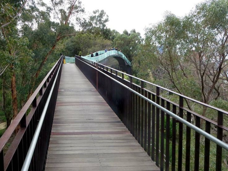 The 620-meter Lotterywest Federation Walkway (2003) in King's Park, Perth, Western Australia, is suspended among a canopy of tall eucalypts.