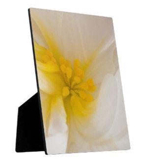 White Begonia Photo Plaques