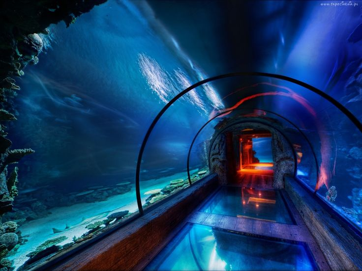 #Gdynia #Aquarium is a unique place in the city center. Here you can see unusual species of fish, amphibians and reptiles from different parts of the world, such as Africa, North America, or northern part of our continent.