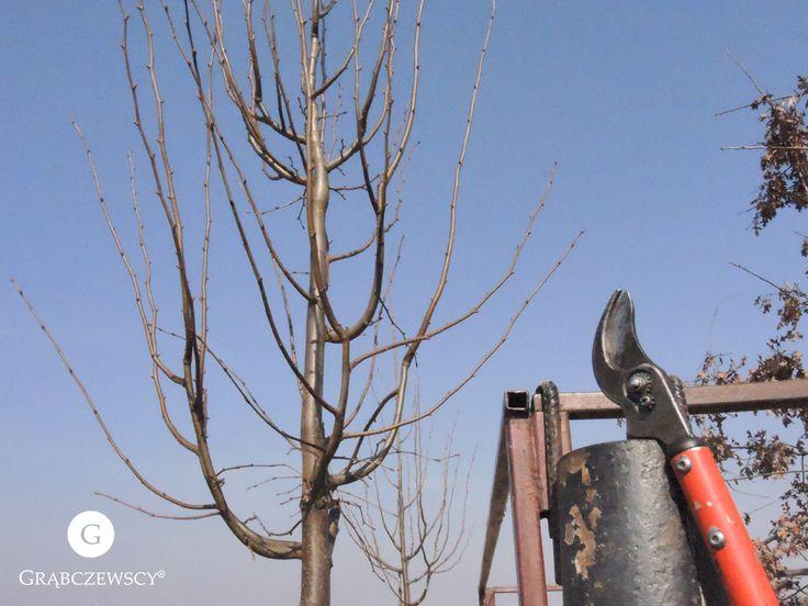 Z serii: narzędzia naszej pracy :)   #Work #Garden #Grabczewscy