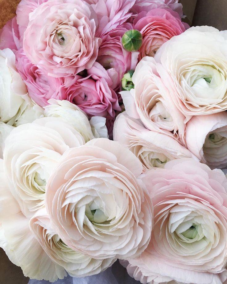 Цветы картинки ранункулюс английские, надписью