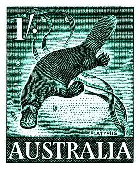 Vintage and beautifully engraved postage stamp issued in 1959 by Australia in a series commemorating native fauna, here depicted is the platypus (Ornithorhynchus anatinus) which is a semiaquatic mammal endemic to eastern Australia, including Tasmania. platypus,marsupial,australia,outback,vintage,postage stamp,native fauna,mayo,postal,ephemera,ozzie,uluru,ayers rock,aquatic,wildlife