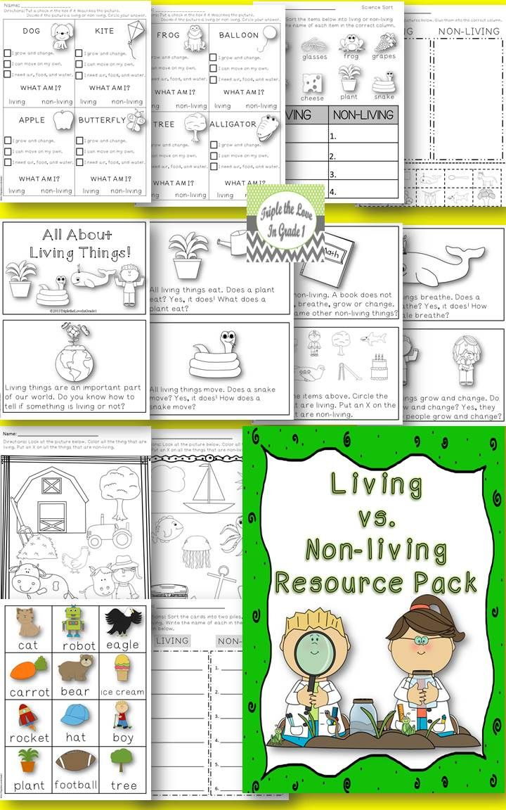 Perfect for K or 1st grade classroom. Original mini reader included with lots of great activities to help students practice sorting objects into living and non-living!