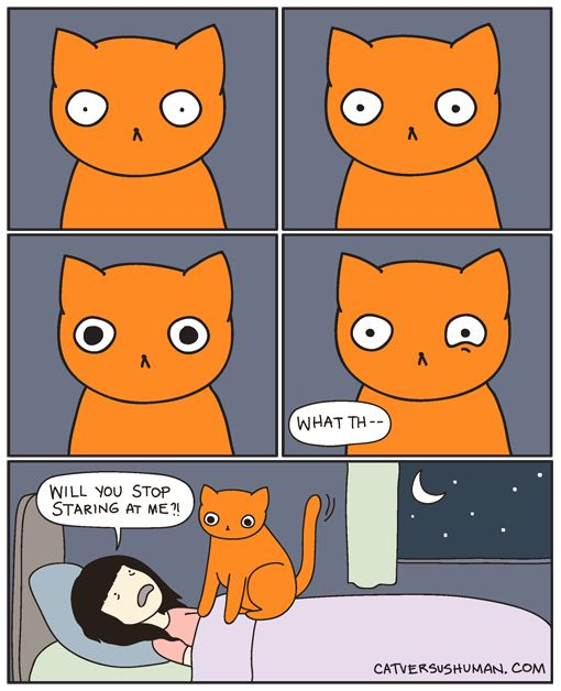 """catversushuman: """"I panicked and woke up in the middle of the night with my chest feeling so heavy. It turns out your cat was sitting on me, watching me sleep."""" - A Former House Guest"""