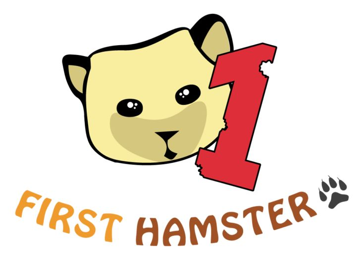 10 Differences Between Syrian And Dwarf Hamsters First