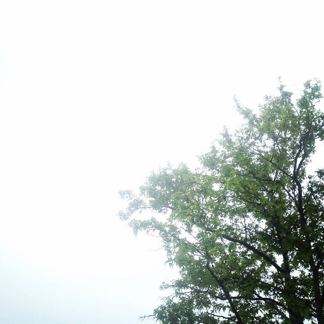 Rainy sky #southernhemisphere #spring #nature #sky #rain #tree #planet